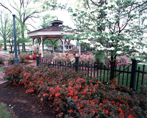 Collierville Tennessee Azaleas at the Gazebo