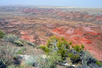 Arizona's Painted Desert 011