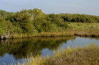 Chappique Bayou along the Creole Nature Trail (2).JPG