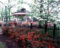 Azaleas at the Gazebo
