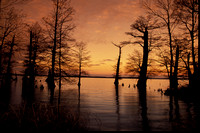 Reelfoot Lake Sunset West Tennessee
