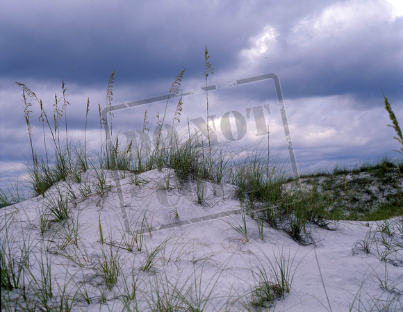 Sand Dunes & Sea Oats Destin MF189.jpg